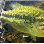 fishing-pole-for-kids-with-underwater-video-camera